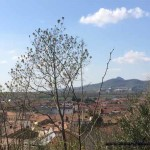Collegato ambientale – green economy