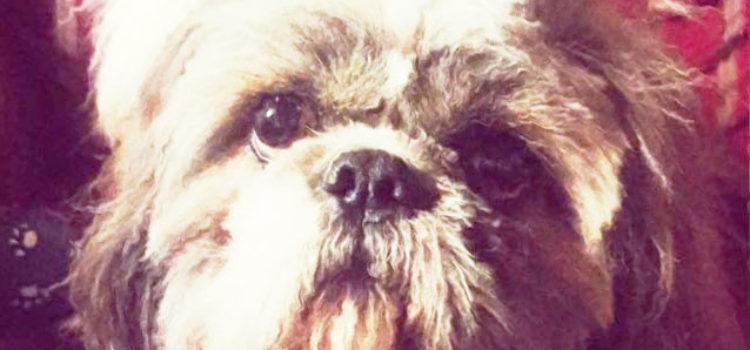 Servizio di cattura, mantenimento e cura dei cani vaganti ed evidenza pubblica