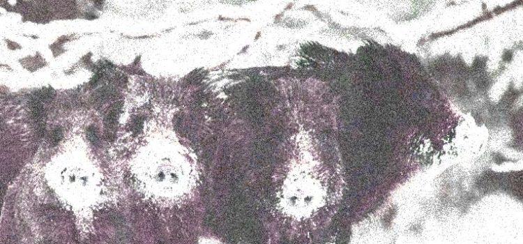 Danni causati da animali selvaggi e profili di responsabilità