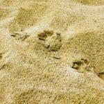 Demanio marittimo (spiagge) e acquisizione delle opere inamovibili al termine della concessione