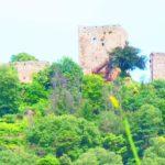 DIA, trasformazione urbana e (ri)piantumazioni arboree (morte)
